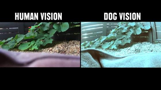 犬と人間の色の見え方