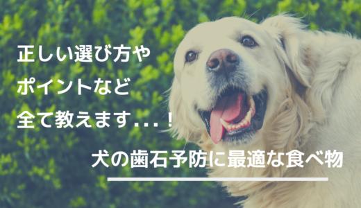 犬の歯石予防に最適な食べ物を紹介|正しい選び方とポイントを抑えて重症化を回避