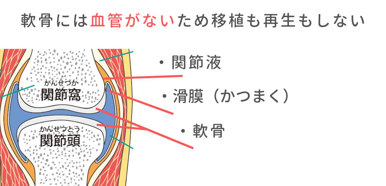 関節・軟骨の仕組み