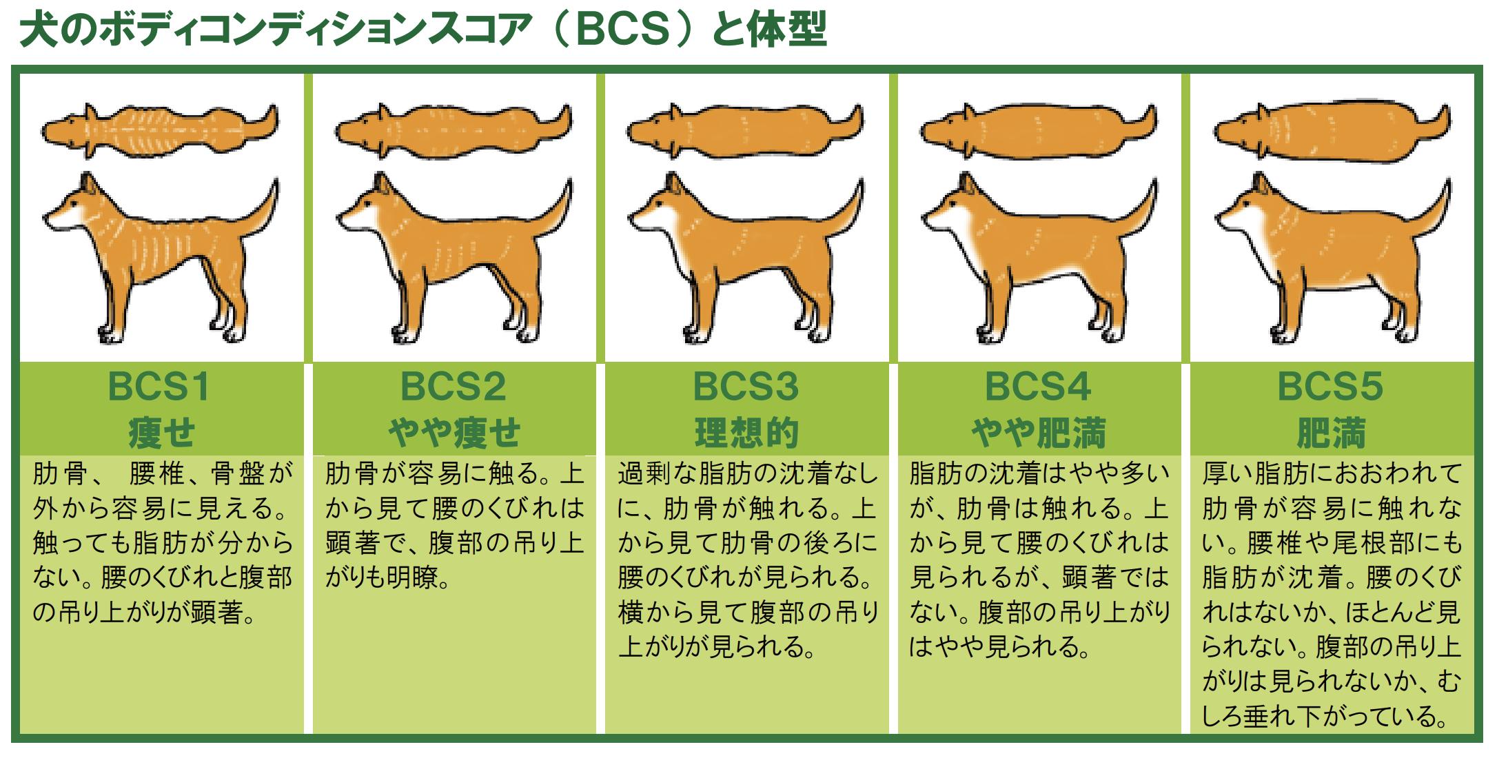 犬 肥満 ボディコンディション